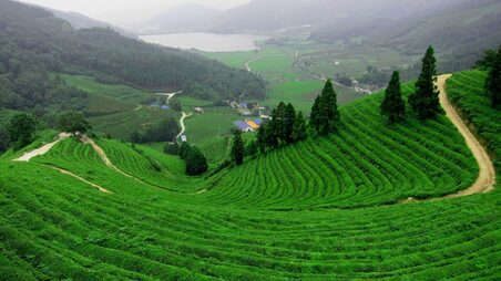 Munnar Tea Gardens and Tour Packages